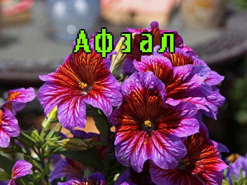 Необычные цветы фото красивые картинки