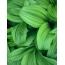 Фото каталог цветов и зелени